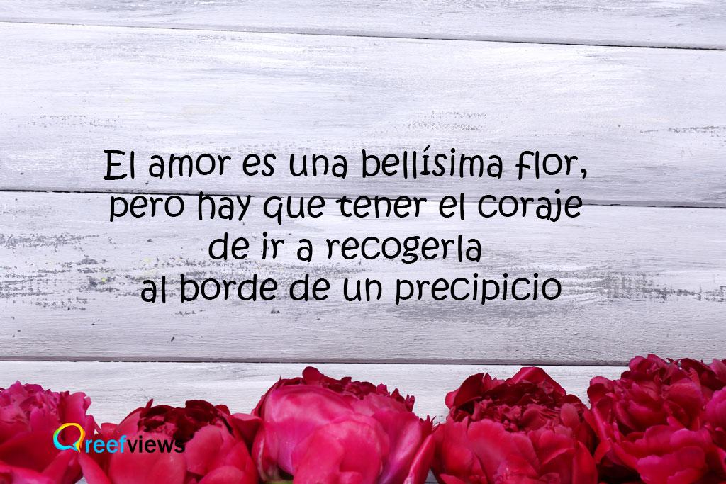 El amor es una flor, frases con amor
